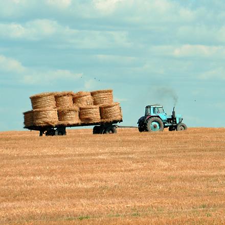 Tractor pulls hay bails